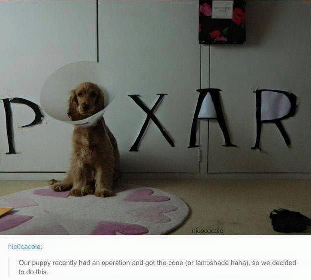 dog meme with cone wearing dog made to look like the Pixar logo