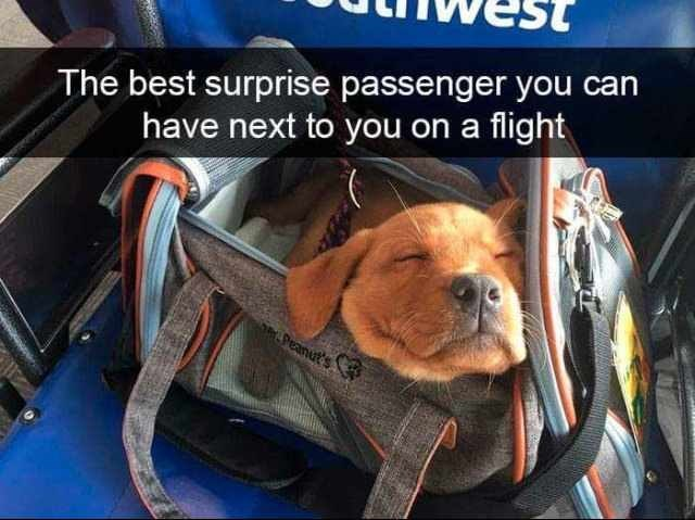 dog meme with snapchat of puppy sleeping in a travel bag