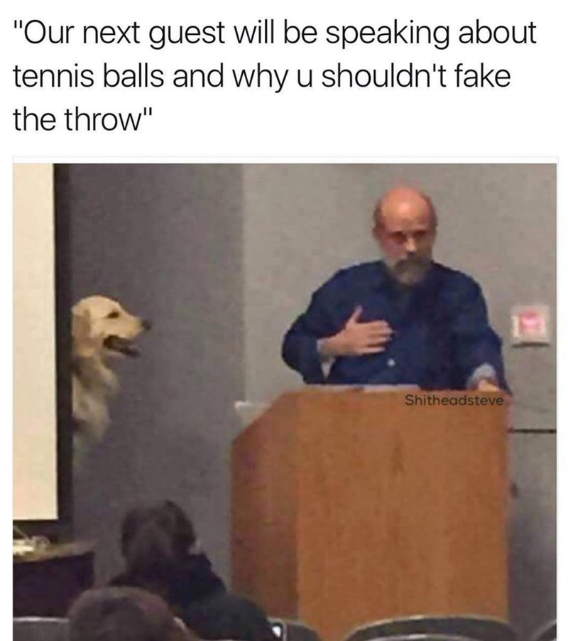 dog meme about dog giving a lecture in class