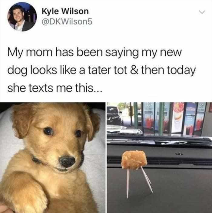 dog meme about puppy looking like a tater tot on toothpicks