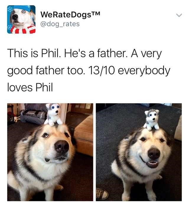 dog meme about rating dogs with pic of dog balancing puppy plushie on his head