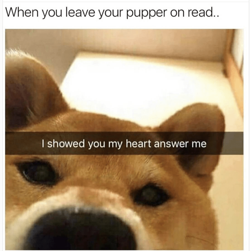 dog meme with snapchat of Shiba Inu asking why you're ghosting him