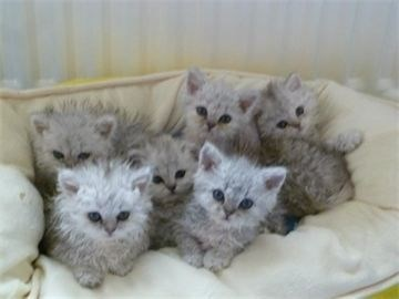 poodle kittens sitting together on a bed
