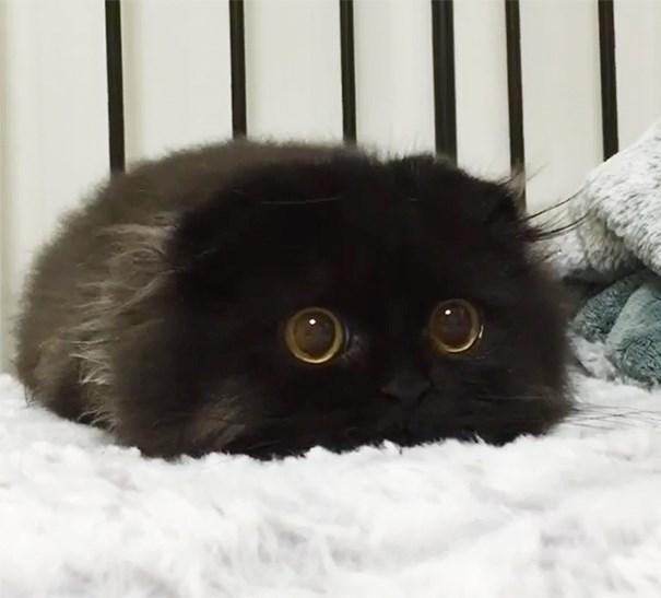 black kitten on a bed looking afraid