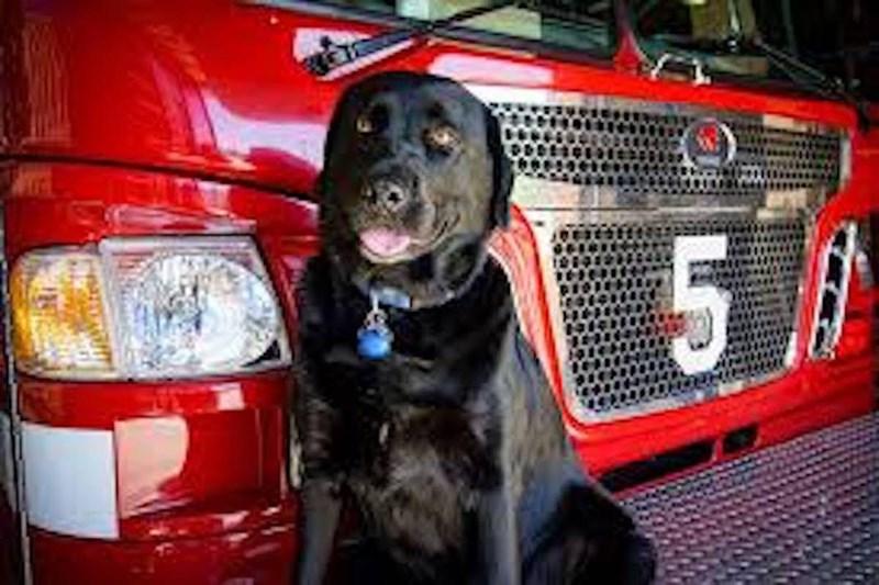 Dog - 5 A