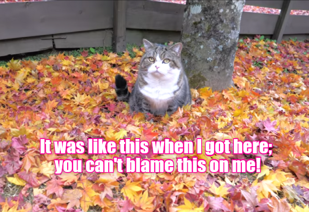 Can\'t blame this on me!