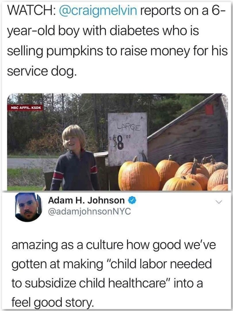 meme about a boy selling pumpkins to raise money for his dog