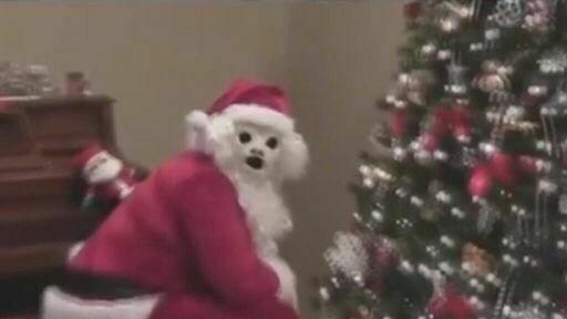 cursed image - Christmas tree and santa claus dog