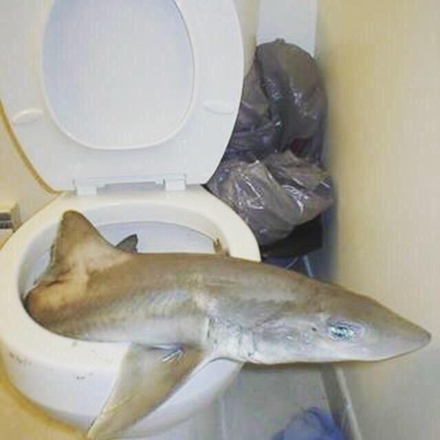 cursed image - Fish