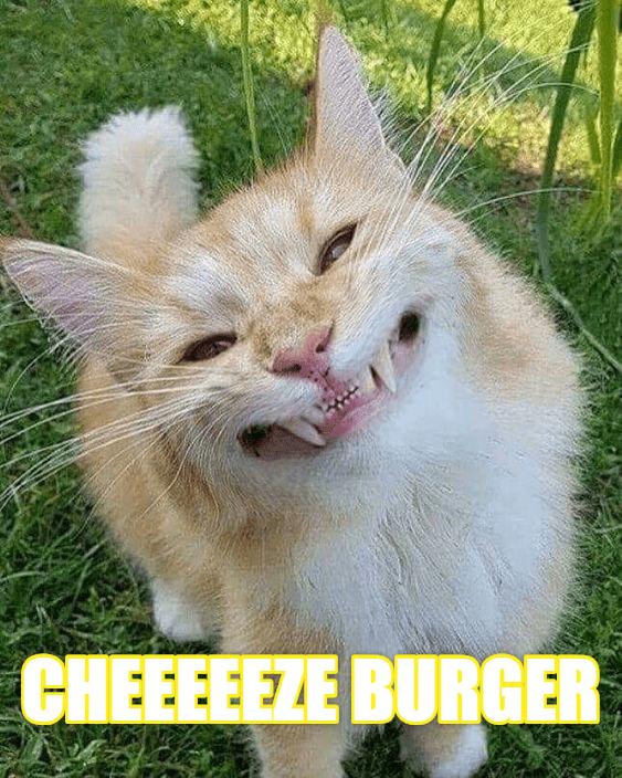 Cheezburger Image 9250018048