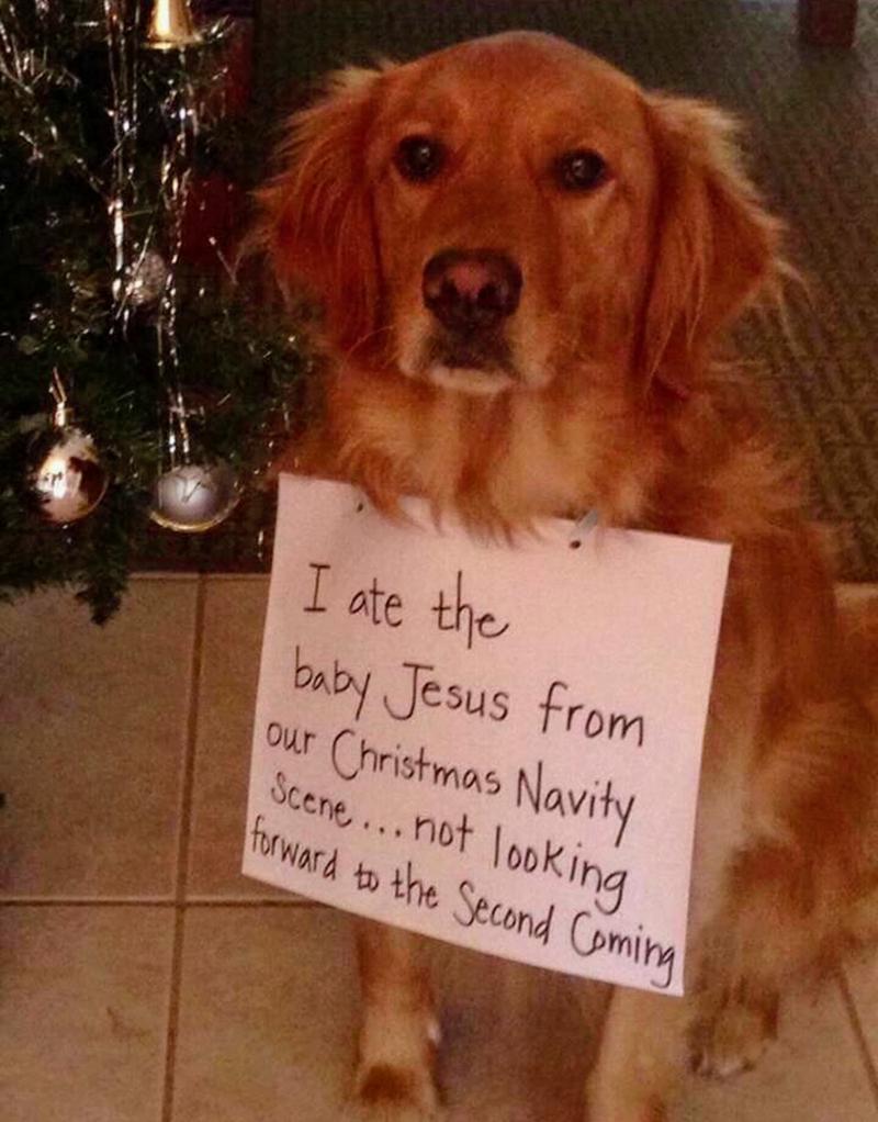 christmas cute doggo Xmas - 9250063616