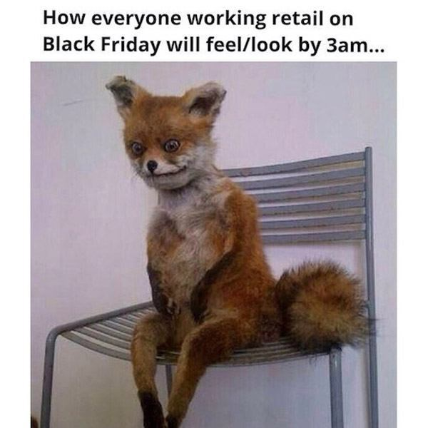 Canidae - How everyone working retail on Black Friday will feel/look by 3am...