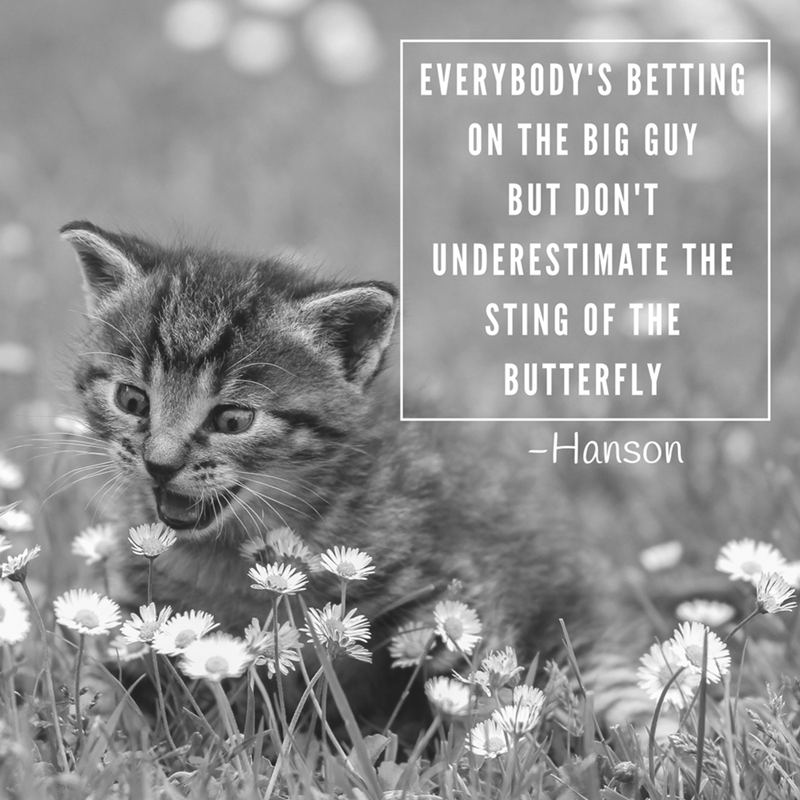 Cat - EVERYBODY'S BETTING ON THE BIG GUY BUT DON'T UNDERESTIMATE THE STING OF THE BUTTERFLY -Hanson