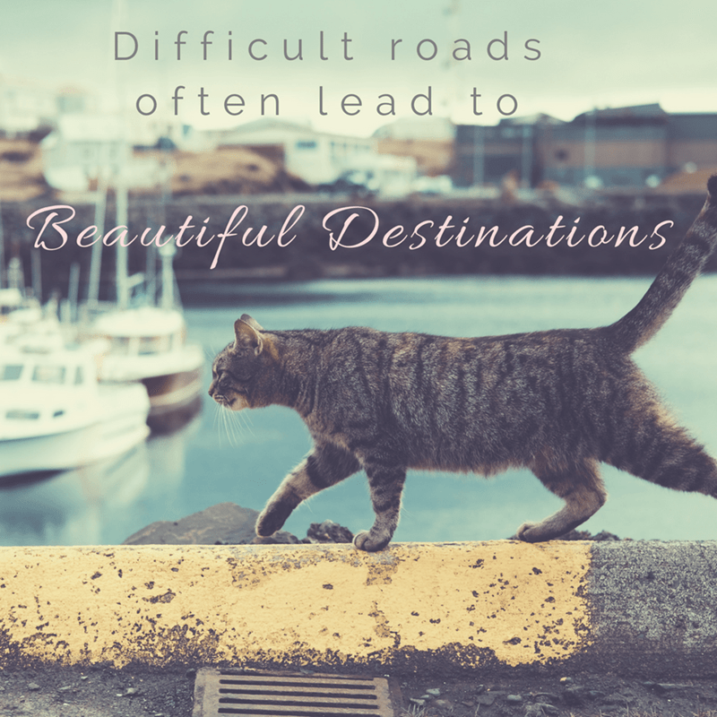 Cat - Difficult roads often le ad to Beautiful Destinations
