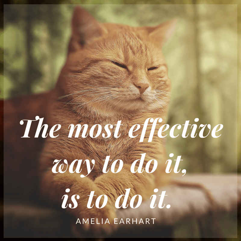 Cat - The most effective way to do it. is to do it. AMELIA EARHART