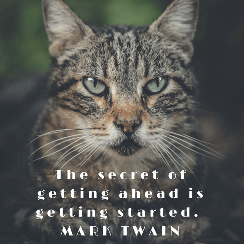 Cat - The secret of getting ahead is getting started. MARK IWAIN