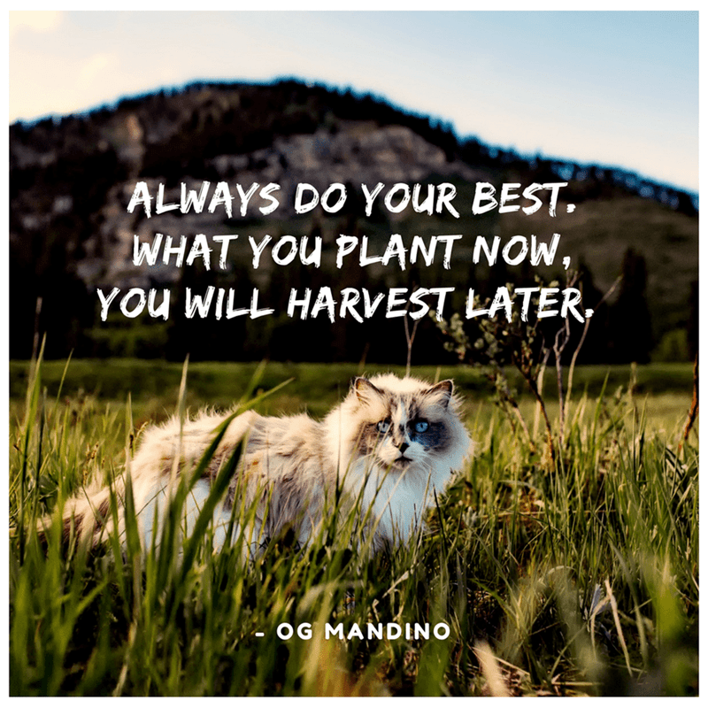 Cat - ALWAYS DO YOUR BEST WHAT YOu PLANT NOW, You WILL HARVEST LATER OG MANDINO