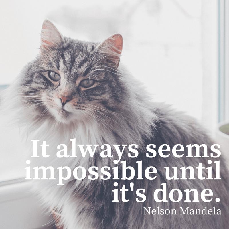Cat - It always seems impossible until it's done. Nelson Mandela