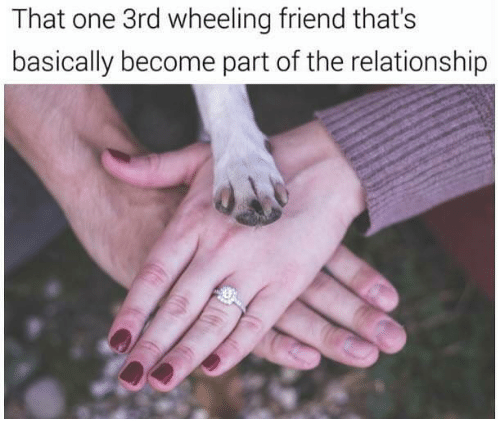 "Caption that reads, ""That one third-wheeling friend that's basically become part of the relationship"" above a pic of a woman putting her hand on top of a man's hand, and a dog's paw on top"