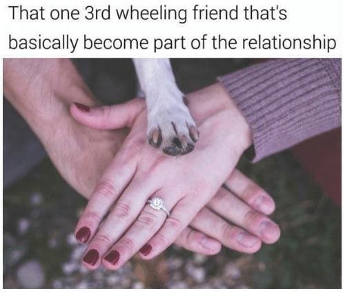 15 Sassy Relationship Memes For The Smitten Couples Memebase