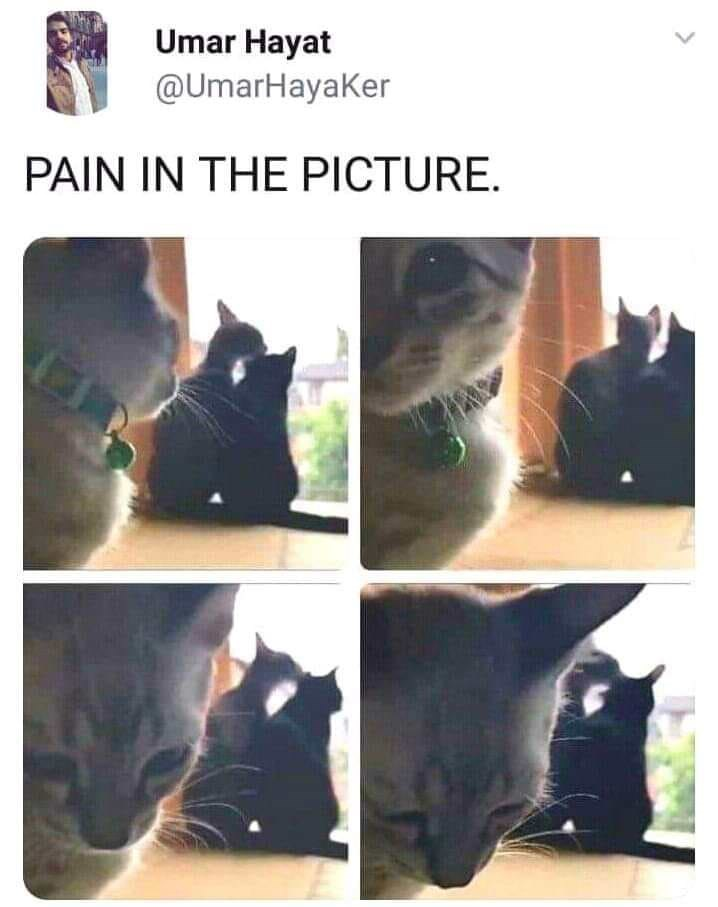 """Caption that reads, """"Pain in the picture"""" above pics of two cats appearing to cuddle and one cat in the forefront looking sad"""