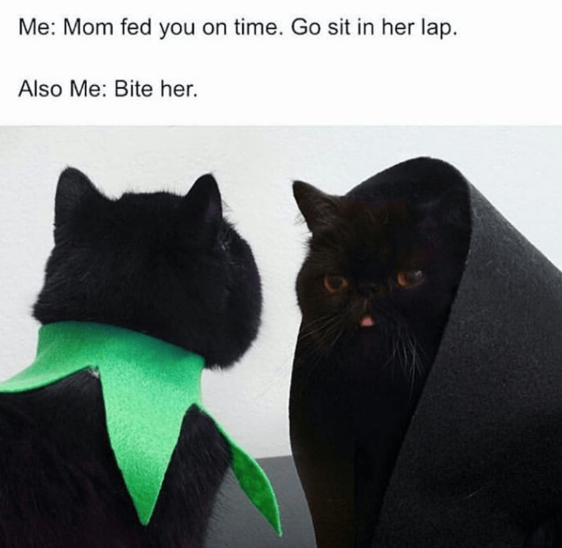 Black cat - Me: Mom fed you on time. Go sit in her lap. Also Me: Bite her.