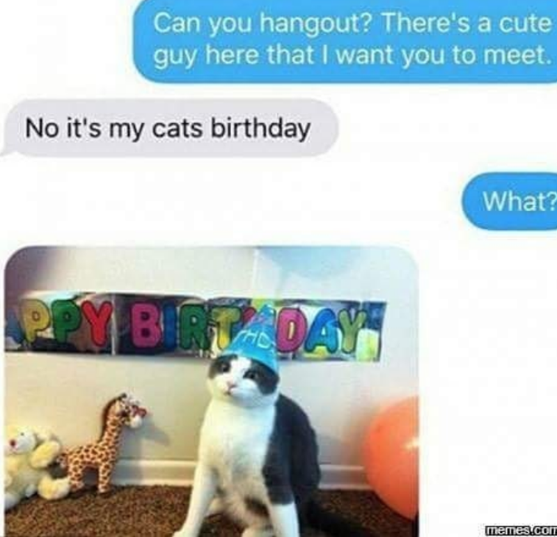 Cat - Can you hangout? There's a cute guy here that I want you to meet. No it's my cats birthday What? PEM BIRTADAY memes.coT