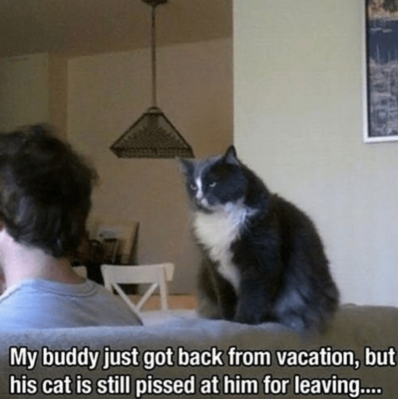 Cat - My buddy just got back from vacation, but his cat is still pissed at him for leaving....