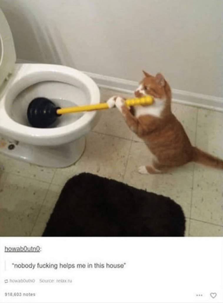"Cat - howaboutno: ""nobody fucking helps me in this house howaboutnoSource tex u 918 603 notes"