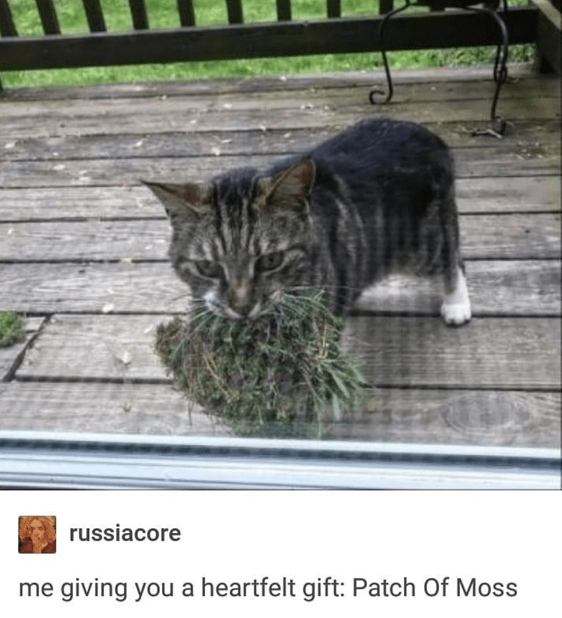 Cat - russiacore me giving you a heartfelt gift: Patch Of Moss