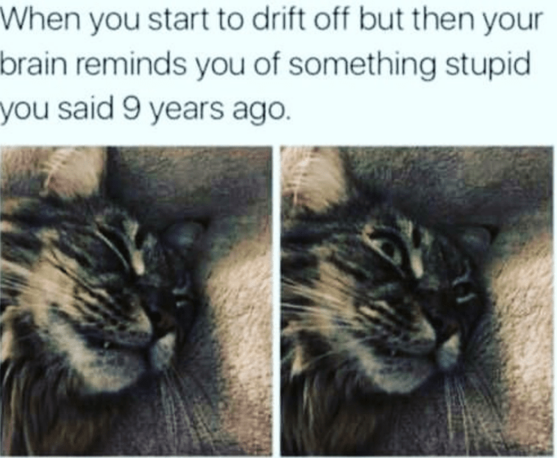 Cat - When you start to drift off but then your brain reminds you of something stupid you said 9 years ago.