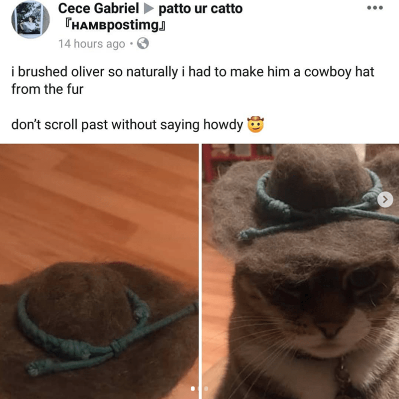 Adaptation - Cece Gabriel patto ur catto THAMBpostimg 14 hours ago i brushed oliver so naturally i had to make him a cowboy hat from the fur don't scroll past without saying howdy