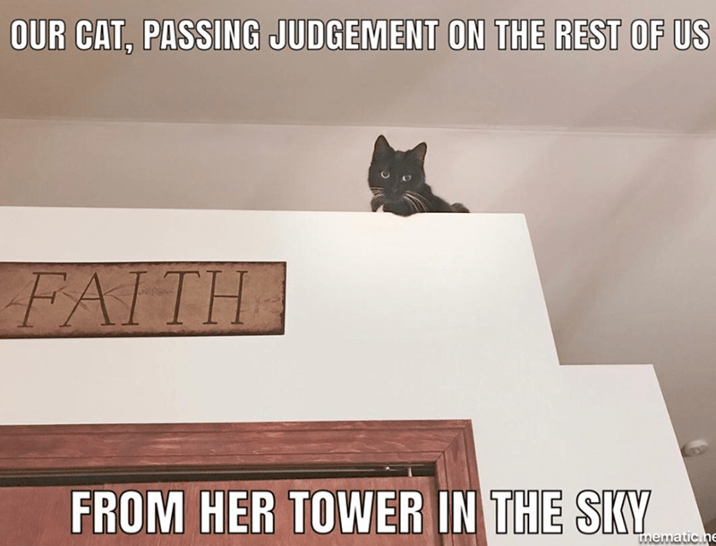 Cat - OUR CAT, PASSING JUDGEMENT ON THE REST OF US FAITH FROM HER TOWER IN THE SKY mematic ne