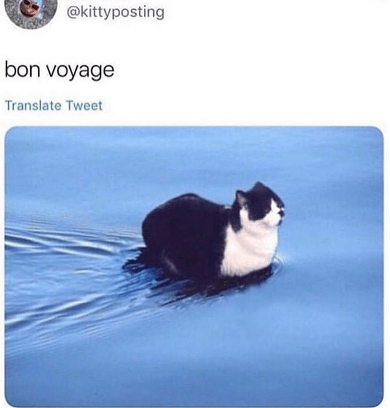 Cat - @kittyposting bon voyage Translate Tweet