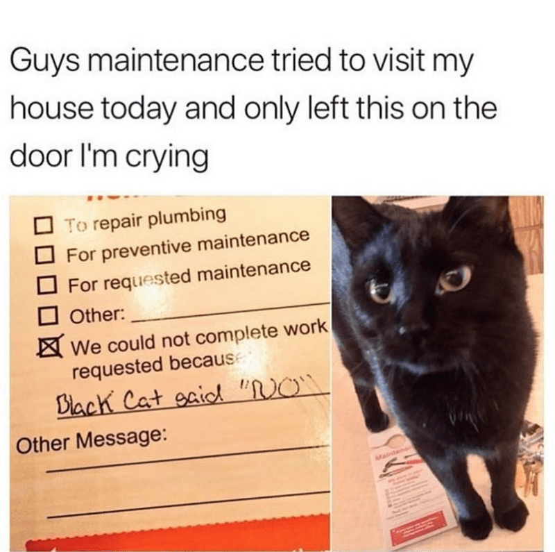 "Cat - Guys maintenance tried to visit my house today and only left this on the door I'm crying To repair plumbing For preventive maintenance For requested maintenance Other: We could not complete work requested because Viack Cat eaiod ""O Other Message: Mainten"