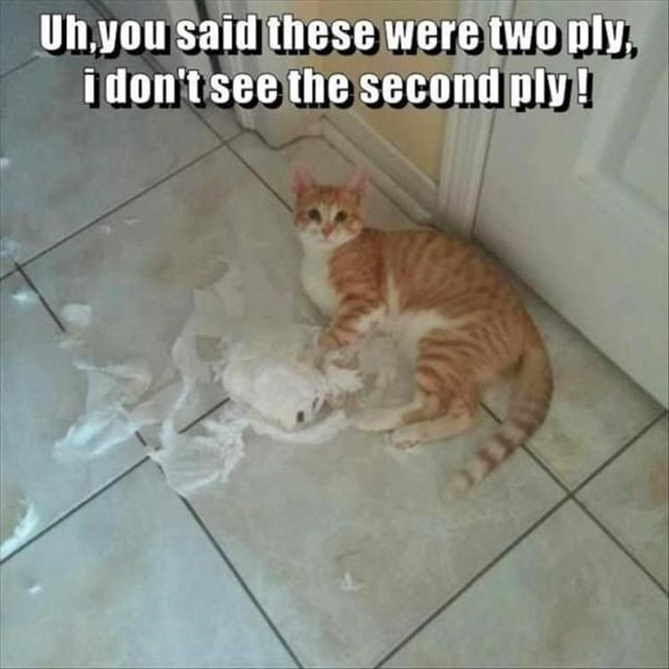 Cat - Uhyou said these were two ply, idon't see the second ply!