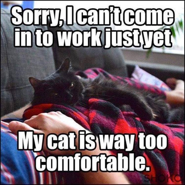Photo caption - Sorry,Icant come in to work justyet My cat is way too comfortable.