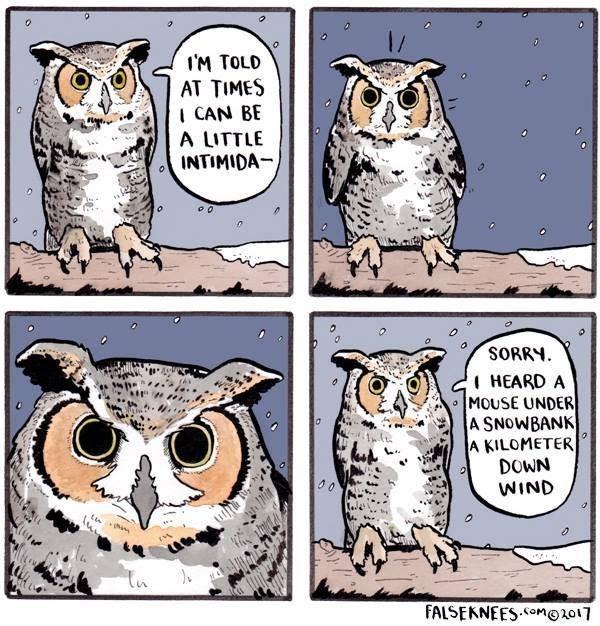 falseknees Owl comic funny web comics - 9250574848