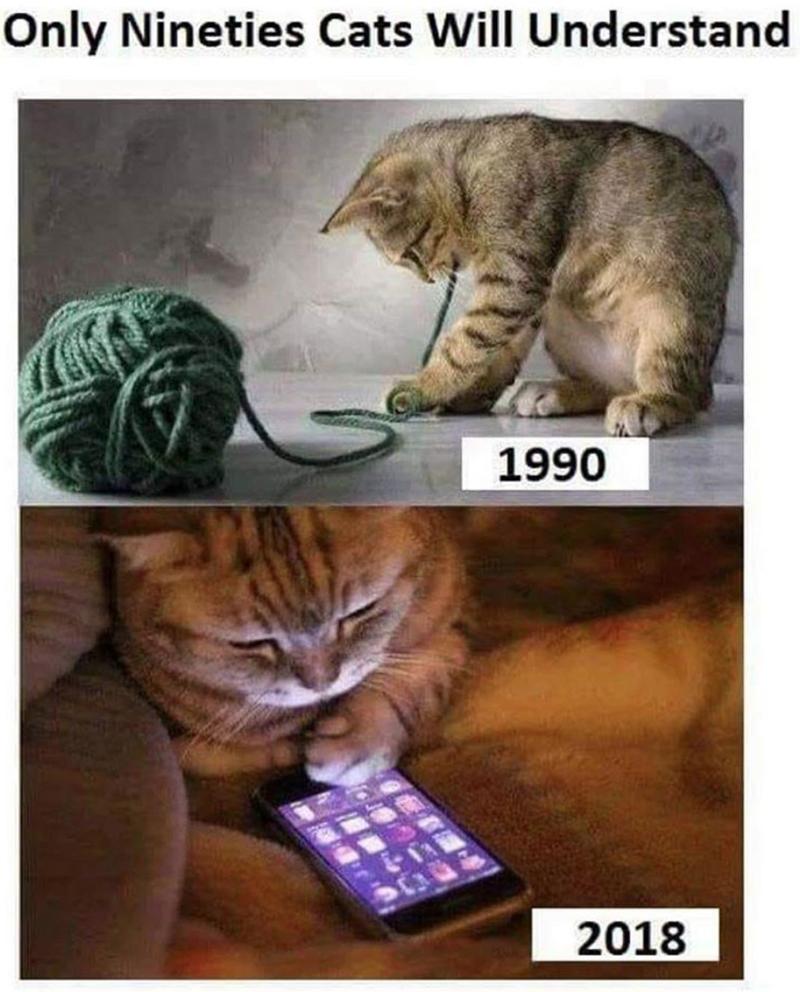 90s kids 90s funny cat memes - 9250696960