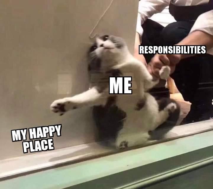 cat - Photo caption - RESPONSIBILITIES ME MY HAPPY PLACE