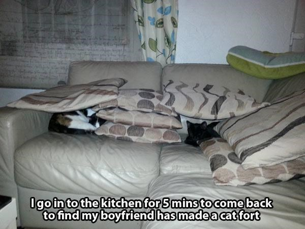 """Text overlay that reads, """"I go into the kitchen for five minutes to come back to find my boyfriend has made a cat fort"""" below a pic of said cat fort made out of some pillows on a couch"""