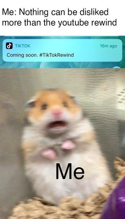 scared hamster meme - Hamster - Me: Nothing can be disliked more than the youtube rewind d TIKTOK 16m ago Coming soon. #TikTokRewind Me