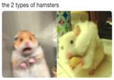 scared hamster meme - Snout - the 2 types of hamsters
