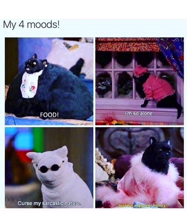 Canidae - My 4 moods! Pm so alone FOOD! Curse my sarcastic nature Just beo uoen honey! w