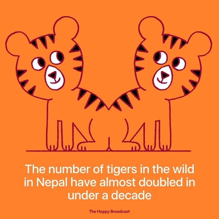 good news - Text - The number of tigers in the wild in Nepal have almost doubled in under a decade The Happy Broadcast
