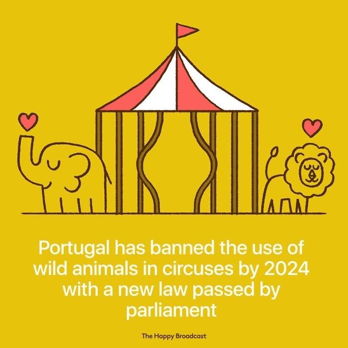 good news - Yellow - Portugal has banned the use of wild animals in circuses by 2024 with a new law passed by parliament The Happy Broadcast