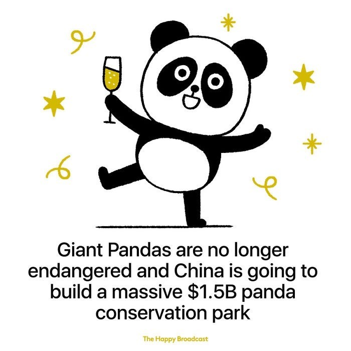 good news - Cartoon - Giant Pandas are no longer endangered and China is going to build a massive $1.5B panda conservation park The Happy Broadcast