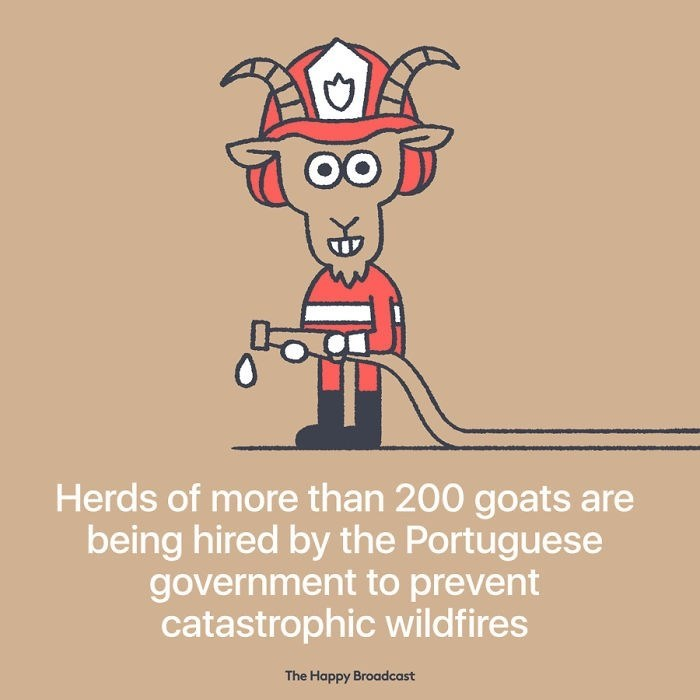good news - Cartoon - Herds of more than 200 goats are being hired by the Portuguese government to prevent catastrophic wildfires The Happy Broadcast