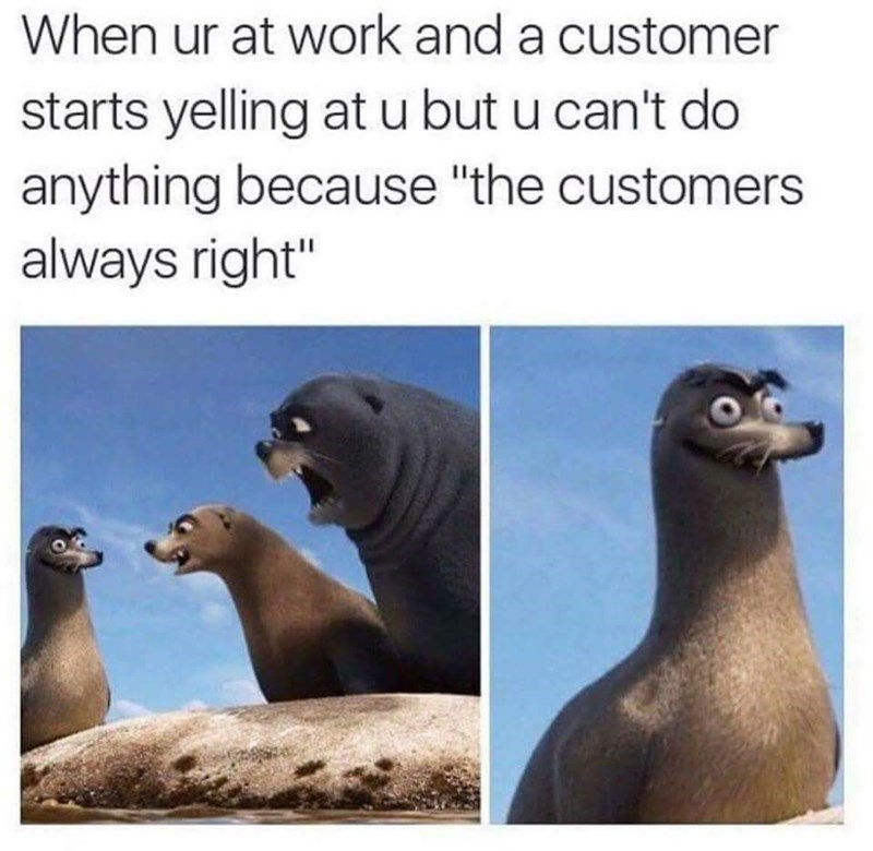 """California sea lion - When ur at work and a customer starts yelling atu but u can't do anything because """"the customers always right"""""""