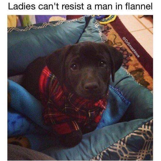 "Caption that reads, ""Ladies can't resist a man in flannel"" above a pic of a little chocolate lab puppy wearing a little flannel jacket"